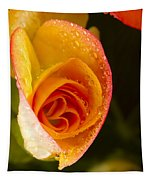 Flower Rieger Begonia 5 Tapestry
