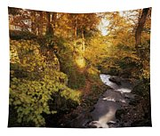 Flowing Water Through A Forest Tapestry