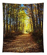 Forest Path In Autumn Tapestry
