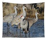 Four Sandhill Cranes Tapestry