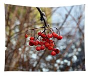 Frozen Mountain Ash Berries Tapestry