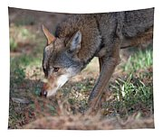 Gentle Wolf Tapestry