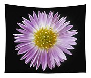 Gerber Daisy In Black Background Tapestry