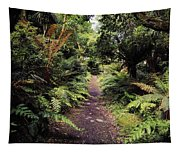 Glanleam, Co Kerry, Ireland Path In The Tapestry