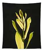 Glorious Willow Aglow Tapestry