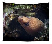 Golden Tail Eel Tapestry