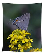 Gray Hairstreak Butterfly Din044 Tapestry