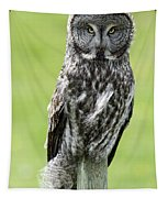 Great Grey Owl, Water Valley, Alberta Tapestry