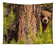 Grizzly Bear Cub Up A Tree, Yukon Tapestry