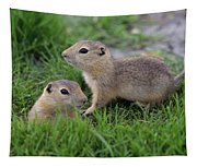 Ground Squirrels, Oak Hammock Marsh Tapestry