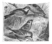 Group Of Sparrows Tapestry