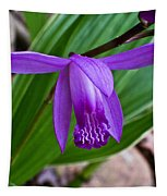 Hardy Orchid 1 Tapestry