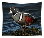 Harlequin Duck Tapestry