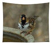 Harris's Sparrow Tapestry