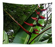 Heliconia Tapestry