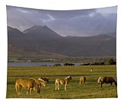 Horses Grazing, Macgillycuddys Reeks Tapestry