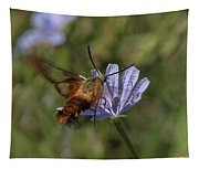 Hummingbird Or Clearwing Moth Din137 Tapestry