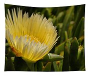 Ice Plant Bloom Tapestry