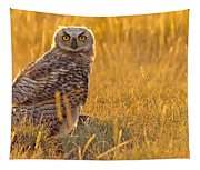 Immature Great Horned Owl Backlit Tapestry