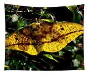 Imperial Moth Din053 Tapestry