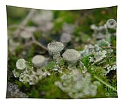 In The Land Of Little Mushrooms  Tapestry