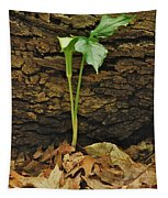 Indian Turnip 5582 0240 Tapestry
