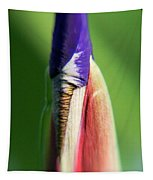 Iris Bud 1 Tapestry