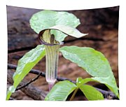 Jack-in-the-pulpit Tapestry