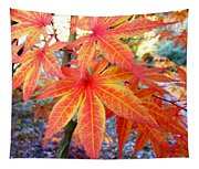 Japanese Maple Leaves 13 In The Fall Tapestry