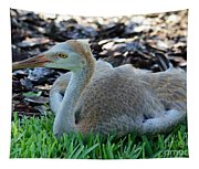 Juvenile Sandhill Crane At Rest Tapestry