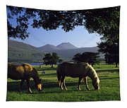 Killarney,co Kerry,irelandtwo Horses Tapestry