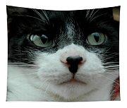 Kitty Closeup Tapestry