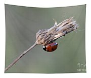 Ladybug On Dried Thistle Tapestry