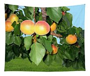 Lake Country Apricots Tapestry