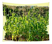Lake Country Corn Tapestry
