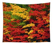 Leaves On Trees Changing Colour Tapestry