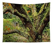 Lichen Covered Apple Tree, Walled Tapestry