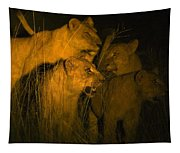Lions At Night Tapestry