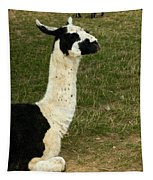 Llama Portrait Tapestry