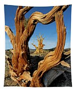 Looking Through A Bristlecone Pine Tapestry