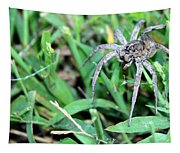 Lurking Spider In The Grass Tapestry