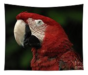 Macaw In Red Tapestry