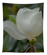 Magnolia Opening Tapestry