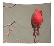 Male Cardinal On A Branch Tapestry