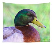 Mallard Drake In Shade Tapestry