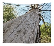 Mighty Tree And The Bark Beetle Tapestry