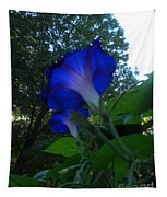 Morning Glory 01 Tapestry