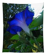 Morning Glory 02 Tapestry