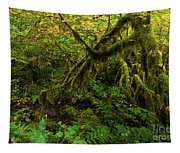 Moss In The Rainforest Tapestry