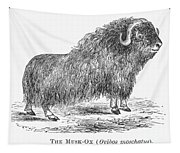 Musk Ox Tapestry